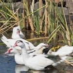 Patos, Terreno, Bio Grand Juriquilla Queretaro